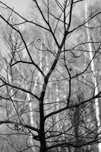 stromy_bw